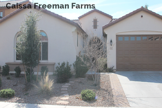 Caissa Freeman Farms