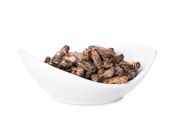 Having Stomach Problems? Your Doctor May Someday Prescribe a Diet of Crickets