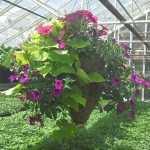 Hastay's Greenhouse & Flower Shop