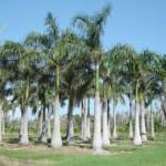 Oasis Tree Farm