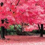 Reggie Lawn & Tree Service